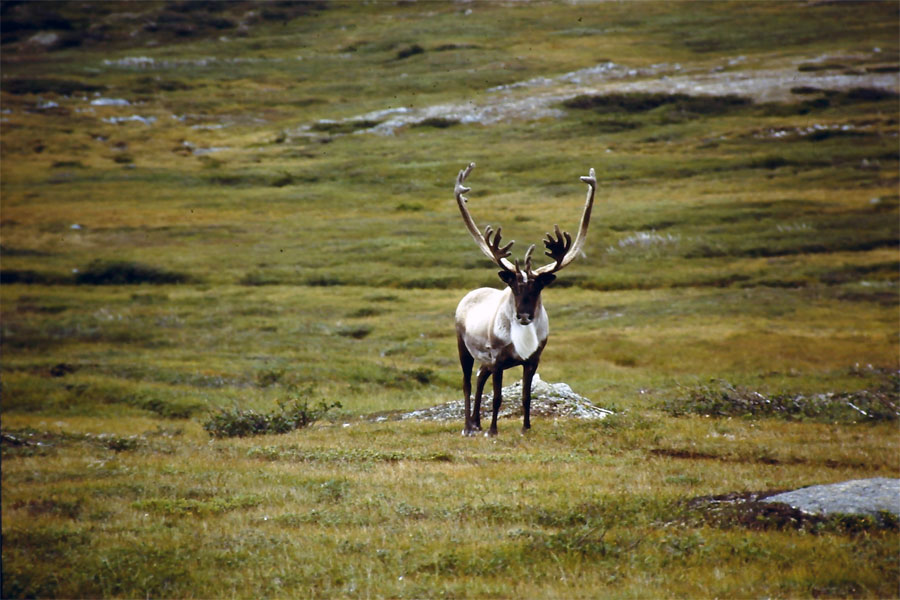 Western Newfoundland Attractions near Deer Lake Motel - Amazing Wildlife are Nearby